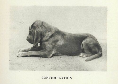 "Bloodhound ""P"" - 1931 Vintage Dog Print - MATTED"