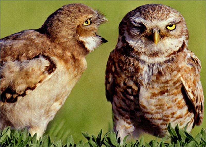 Avanti Owl Couple Communication Funny / Humorous Anniversary Card