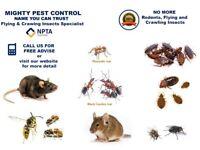 Pest Control Bed bugs Mice Rat Cockroaches Ants Flies Fleas Extermination Service Newham East London
