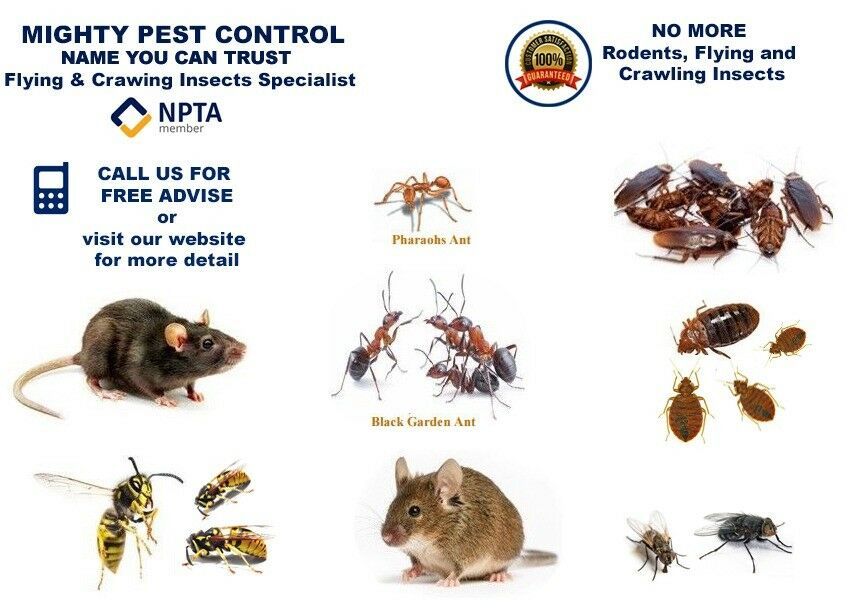Pest Fumigation Control Get Rid Of Bed Bugs Flea Ants Cockroaches Mice Rat Pigeons Wasps In Wembley London Gumtree