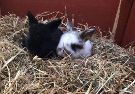Beautiful bunny rabbits