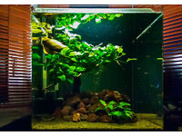 Fish Tank 55 lts with red cherry shrimp and lots of accessories