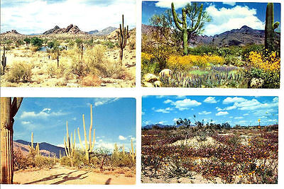AZ - DESERT SCENES - 4 Vintage Desert Un-Used Postcards