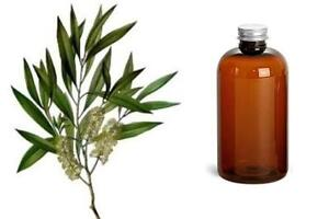 8-OZ-Tea-Tree-Essential-Oil-100-PURE-Uncut-FREE-SHIPPING-USA