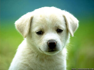 Pet Trax Pet Sitting and Dog Training