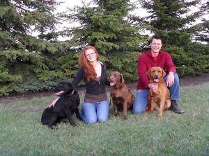 Starstruck Labradors - Quality CKC Health Tested Labrador Pups!