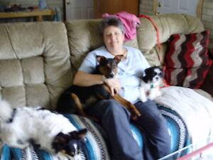 BOOK NOW!!!   SUSIEQ PET SERVICES Windsor Region Ontario image 6
