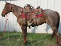 ROPE/RANCH/BARREL/CUTTING/REINING/WORKING COW/HALTER AND SHOW