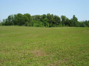 40 Acres on County Road 6, 10 minutes to Cat Centre