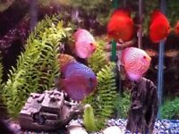 Entretien d'aquarium / Aquarium cleaning