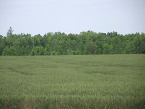 Investment opportunity up to 5000 acres of cash crop farmland