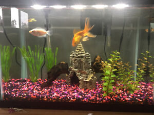 Established fish tank