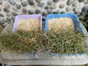 Fresh 2nd cut Timothy hay and natural wood shavings for bedding