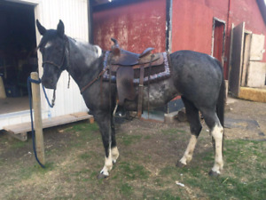 FLASHY PAINT MARE ! PRICE REDUCED