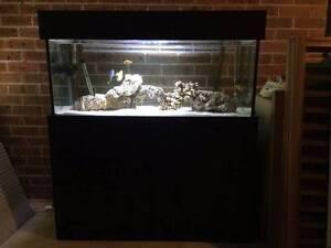 Saltwater fish tanks for sale fish gumtree australia for Custom fish tanks for sale