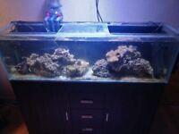 4ft glass aquarium