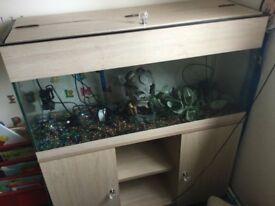 3foot fish tank full set up