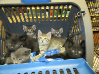 Kittenaide's Rescued Kittens for Mother's Day