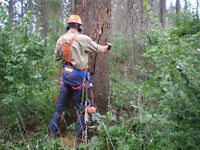 TREE REMOVAL/PRUNING/SERVICE: GET READY for SPRING! DISCOUNTS!