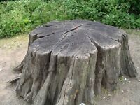 Expert Tree Stump Removal *Affordable & Fast*