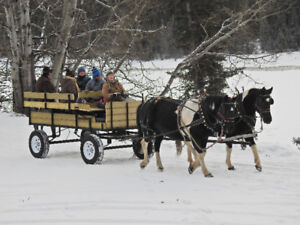Winter Horse Drawn Hay Rides