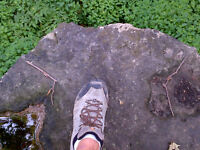 Looking for Bruce Trail Hiking Partner