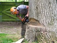 Professional Tree Surgeon - Crown Tree Services