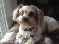 Nansey's Loving Pet Ark & House Sitting Services
