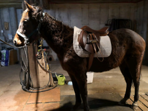 Bay Two Year Old Thoroughbred Filly 900 obo