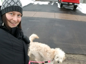 Dog Walking & In Your Home Pet Sitting