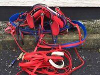 Trotting horse harness