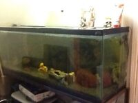 120 gallon fish tank $300