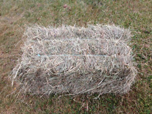 Hay for mulch or construction
