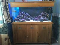 Marine fish tank complete set up with 53kg of live rock