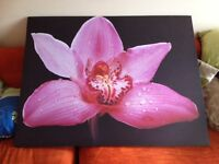 Large canvas picture of a flower