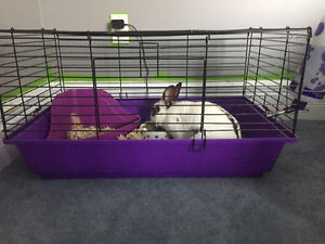 FREE:  beautiful fluffy bunny looking for new loving home! Cambridge Kitchener Area image 2