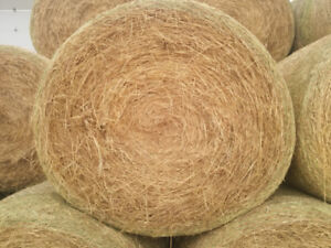 Hay for Sale $35-45.