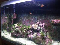 Fluval marine tank setup 2x clown fish