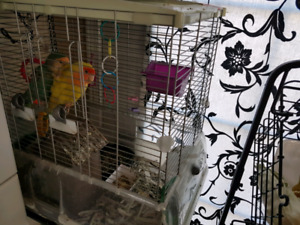 Vision Bird Cage with 2 beautiful love birds