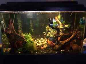 30 Gallon Aquarium with Stand, Fish and tons of accessories!
