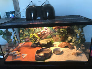 Complete Setup with Leapard Geckos