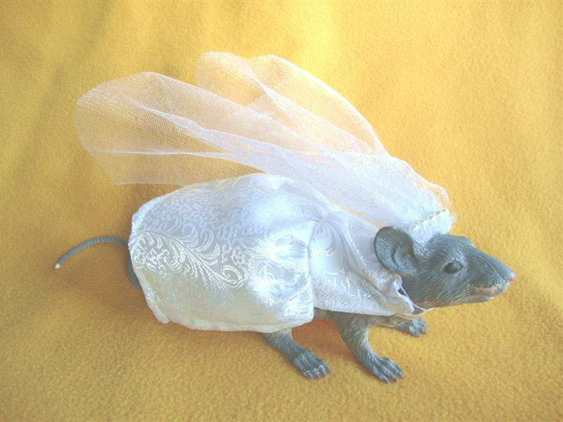 Bride Costume for Rat from Petrats