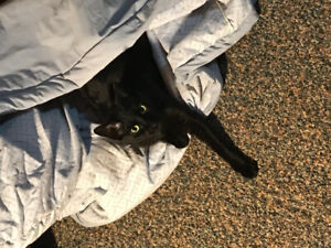 ***LOST*** black cat on Circle Dr and Alberta Ave