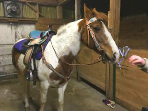 Horse Meet & Greet + Pony Rides