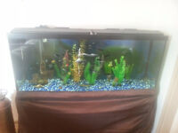 55 Gallon freshwater aquarium with stand, fish and accessories.