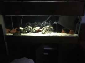 Fish tank complete