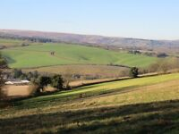 Grazing land to let buckfastleigh