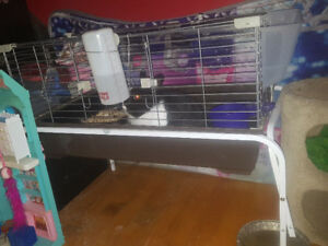 Rabbit male with cage and stand for sale