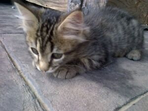 Kitten (male) to give away to good home