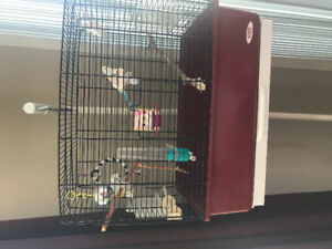 Birds free to good home